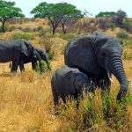 safari_1-elephants-400 (1)