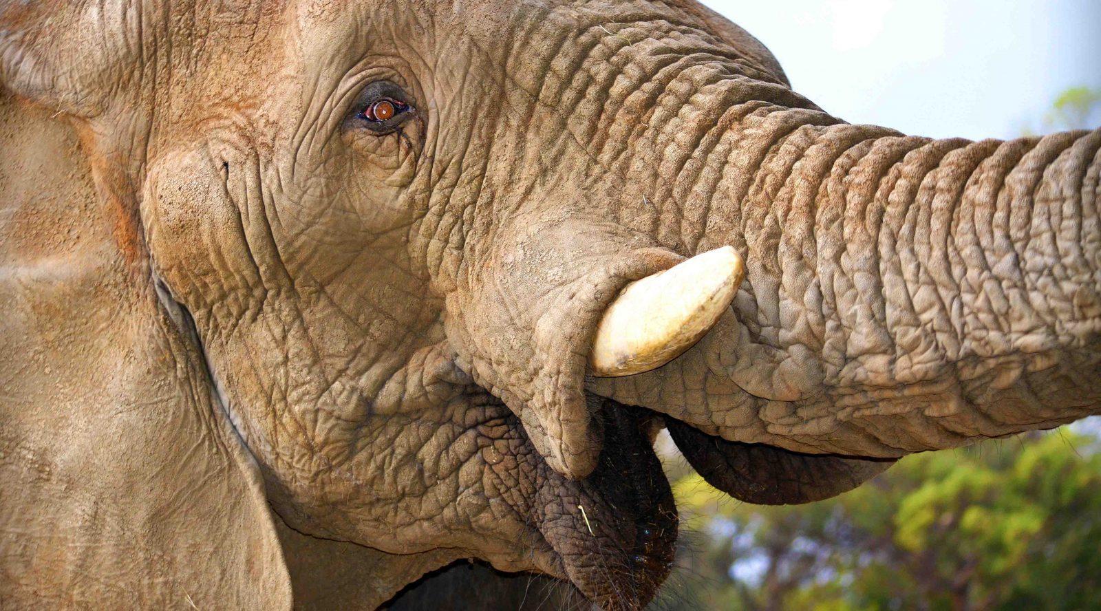 climb kili 4 elephants