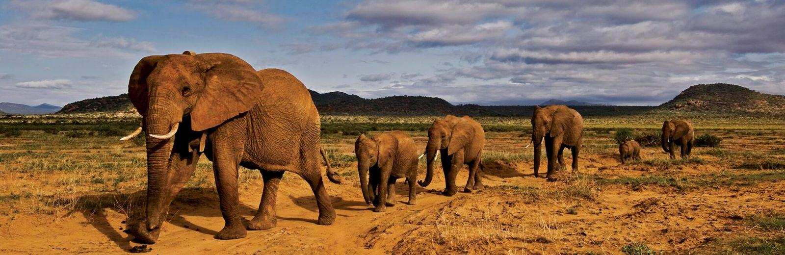 climb kilimanjaro to save elephants