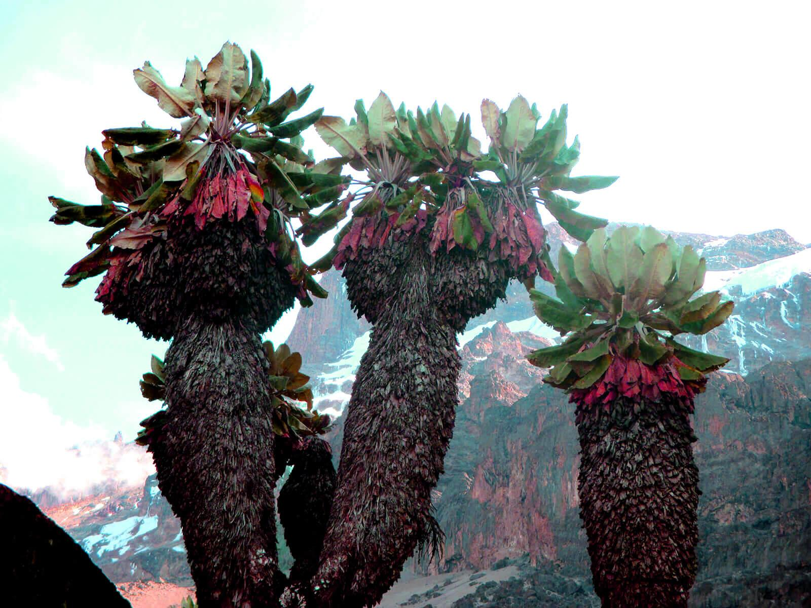 Kilimanjaro climate zones