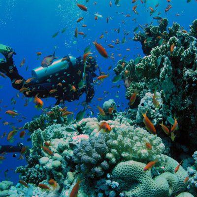 zanzibar-diving