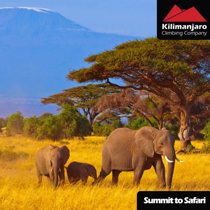 Summit-2-Safari-FB-AD